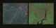 Side-by-side comparison of 30 meter resolution data on the left with 15 meter resolution data on the right, in a zoom down of the DC area from Landsat 7 data acquired on May 11, 1999
