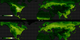 Comparison of fluorescence data (top) to NDVI data (bottom)