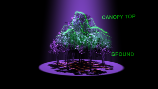Animation depicting using LIDAR to measure the height and density of Earth's forests.