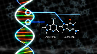 This animation depicts the presence of adenine and guanine, two nucleobases found in DNA, inside a meteorite sample.