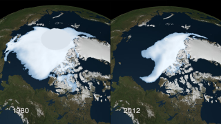 The area covered by older and thicker sea ice in the Arctic diminished by almost 50 percent between 1980 and 2012.