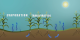This animation illustrates the process of evapotranspiration.  As water soaks into the ground, some is taken up by plants and some evaporates out of the soil.  The plant leaves transpire some of the water they picked up.  Both processes, together known as evapotranspiration, end up cooling the surface the water excapes from as it returns to the atmosphere.