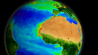 Similar upwelling events yield dense blooms off North Africa's coast.