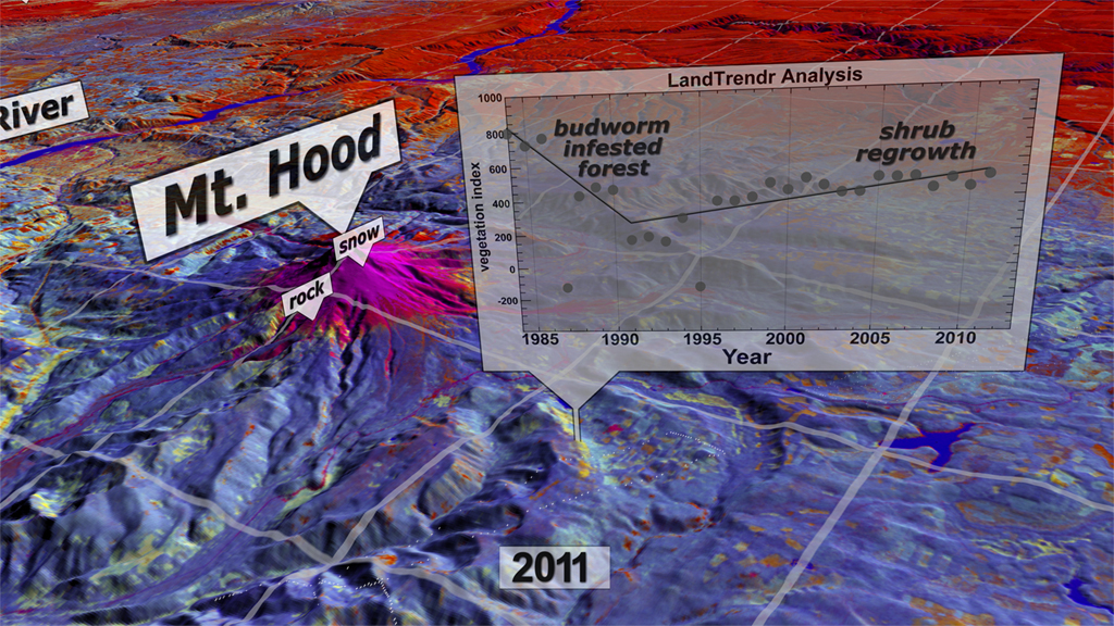 An image showing the analysis of the impacts of insects on Mount Hood National Forest in Oregon, USA