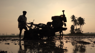 Link to Recent Story entitled: Life of the Monsoon
