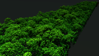 Link to Related Story entitled: A 3D Forest Map