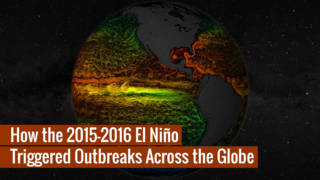 Link to Recent Story entitled: 2015-2016 El Niño Triggered Disease Outbreaks Across the Globe