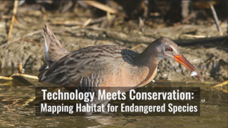 Link to Recent Story entitled: Technology Meets Conservation