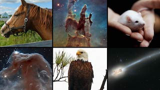 Link to Recent Story entitled: Hubble Celebrates World Wildlife Day
