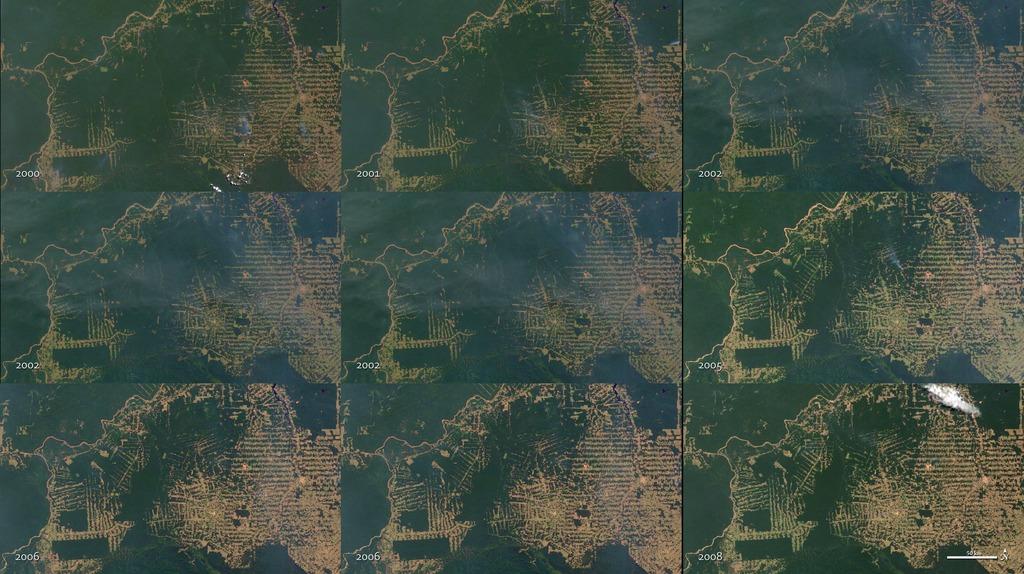 Image result for agribusiness deforestation