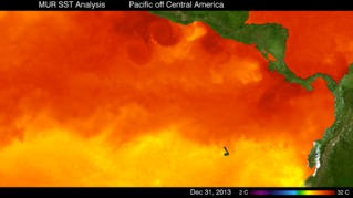 High-resolution SST in the Eastern Pacific, January 2011 to December 2013.